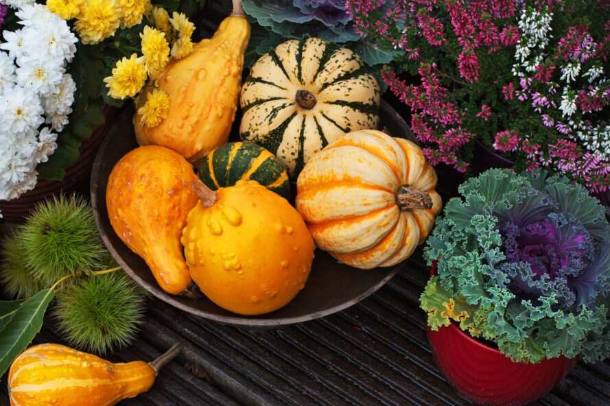 Autumn thanksgiving decor with pumpkins, flowers in garden