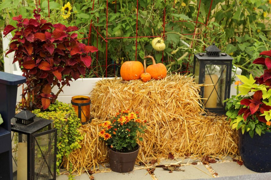 Autumn decorations of a raised bed garden and patio with pumpkin hay bales and chrysanthemums
