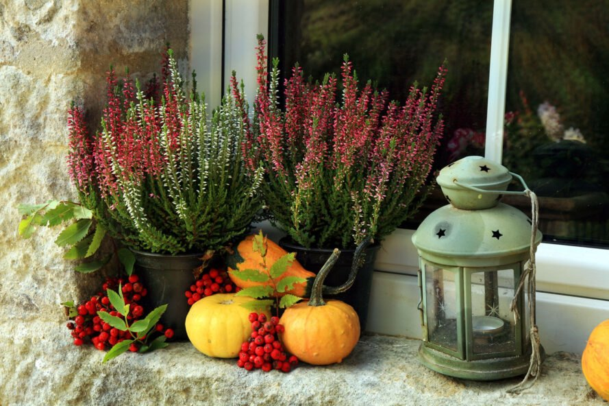 Pumpkin, heathers and lantern on window