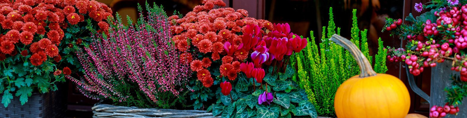 Pumpkin and colorful flowers in baskets