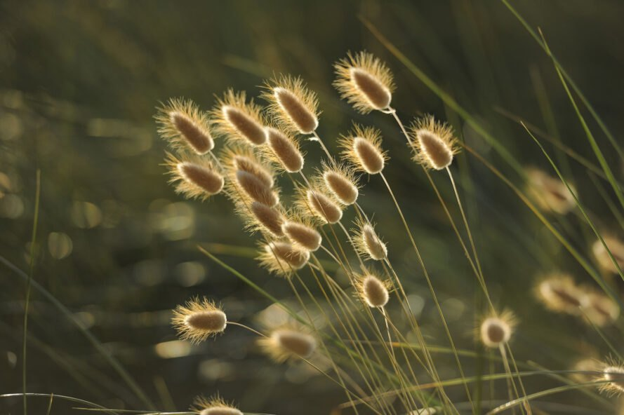 seeded plants blowing in the wind
