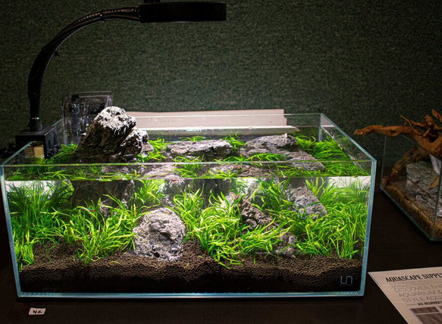 aquascaped nano tank on display