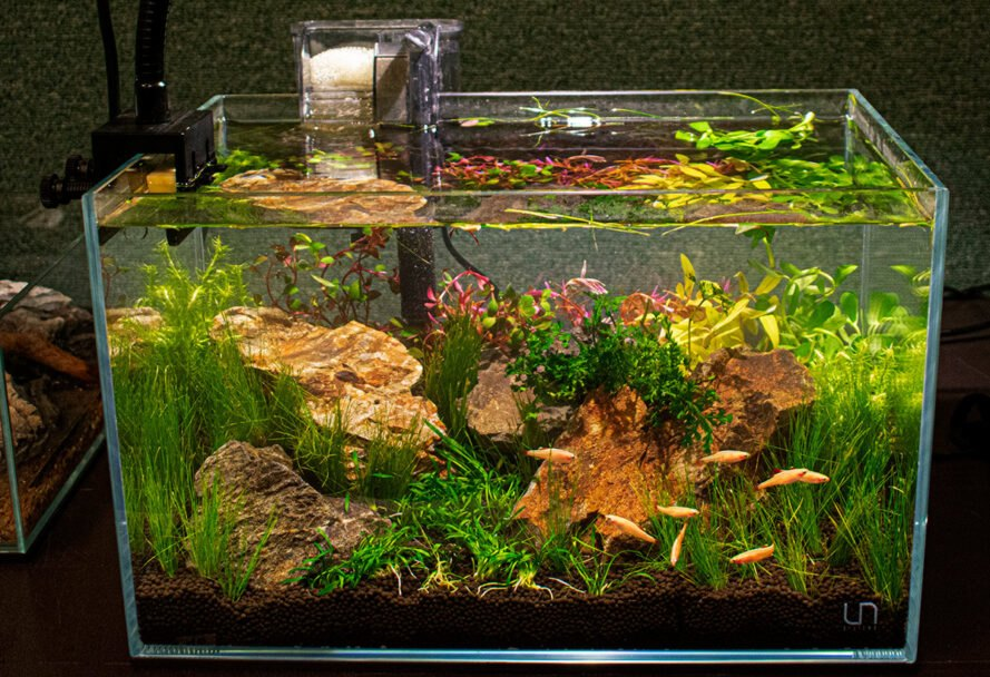 San Diego Tropical Fish Society S Annual Show Celebrates Natural Eco Minded Aquascaping