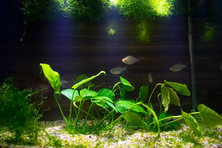 fish tank with plants on ground and floating