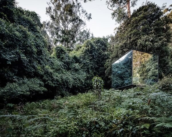 small mirrored building in a forest