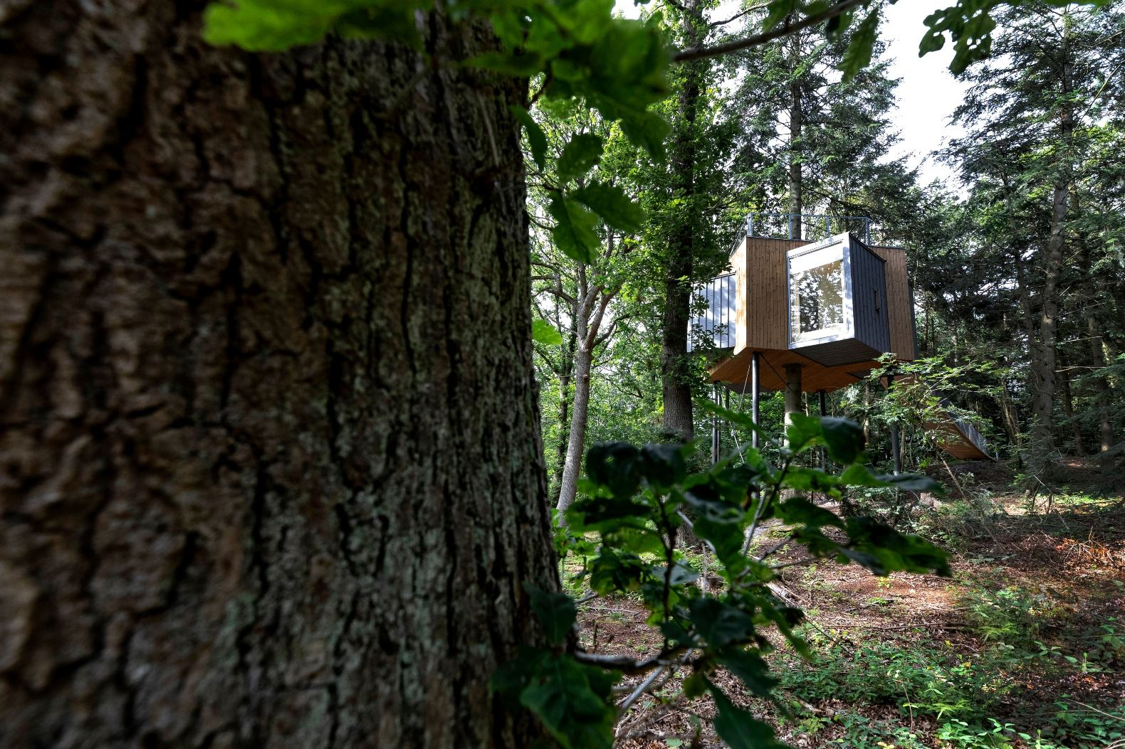 Sigurd Larsen completes a luxurious, treetop hotel cabin in a Danish forest