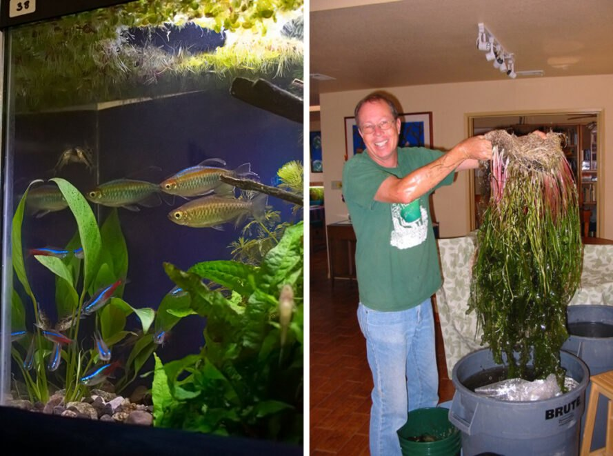 On the left, plants and fish in a tank. On the right, Mark Ferguson holding aquatic plants.