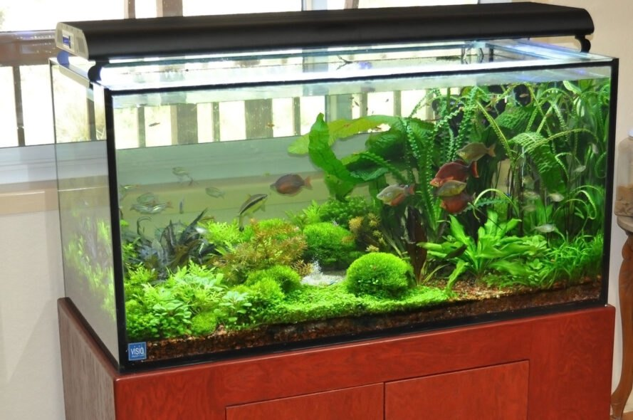 fish tank filled to the brim with plants and healthy fish