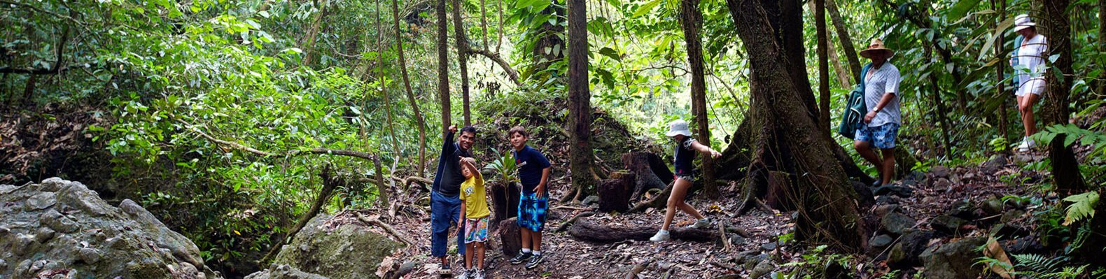 people in a tropical forest pointing at the trees
