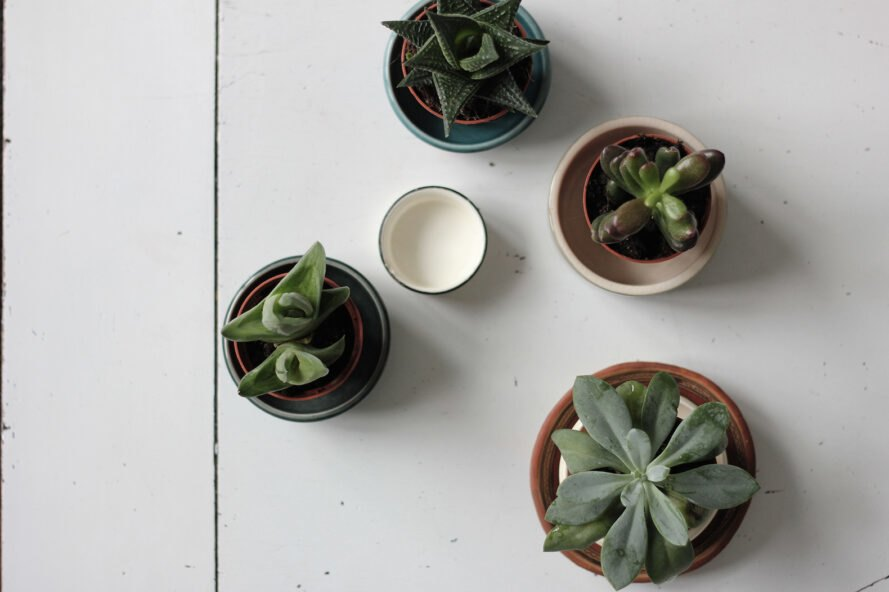 four succulents on white table