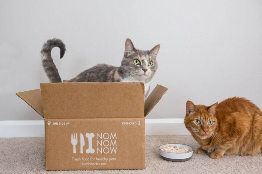 cats in a cardboard box