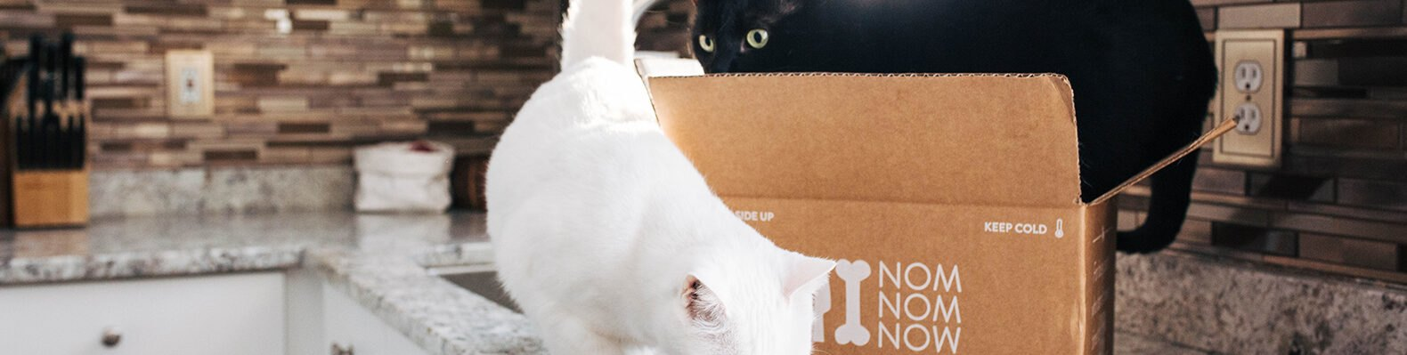 cats in cardboard box on kitchen counter