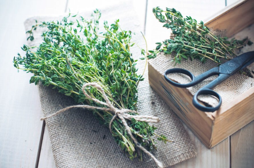 herbs tied up for drying