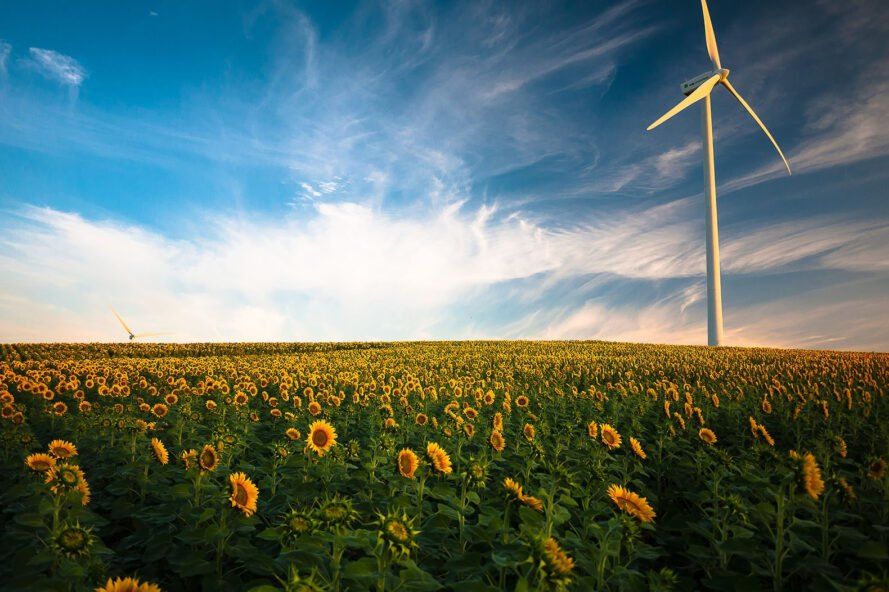 a blue sky with light clouds over a field of sunflower and a wind turbine on the left