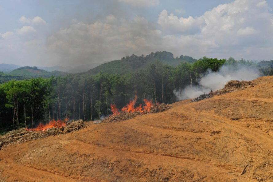 smoke and fire as a rainforest is cut and burned for palm oil