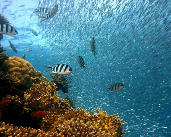 a brownish-orange coral reef to the left with schools of fish to the right