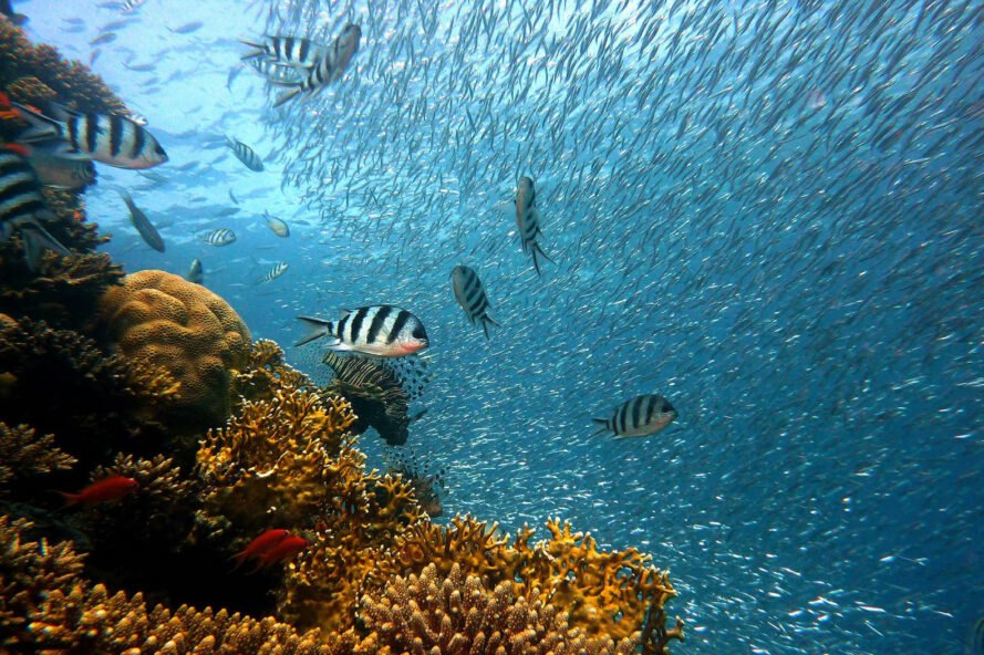 a brown-orange coral reef on the left, with schools of fish on the right