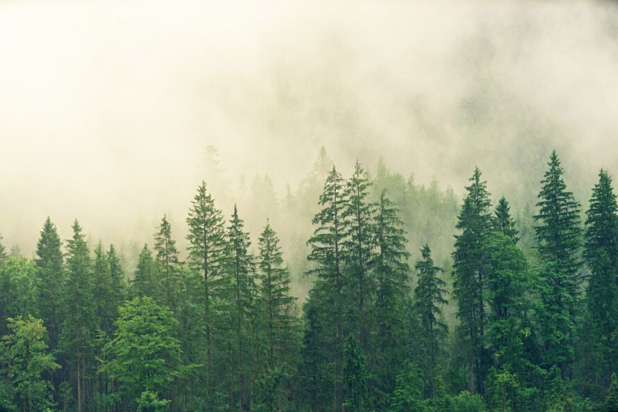 a forest covered in fog