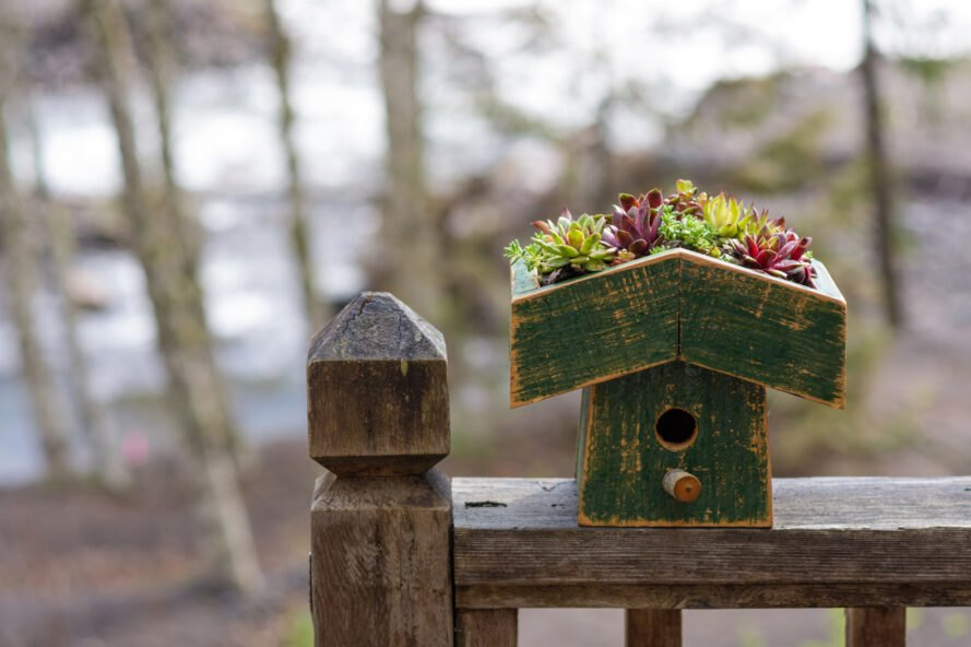 green bird house with succulents planted on roof