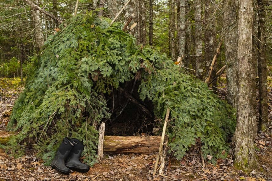 shelter made from tree branches in forest