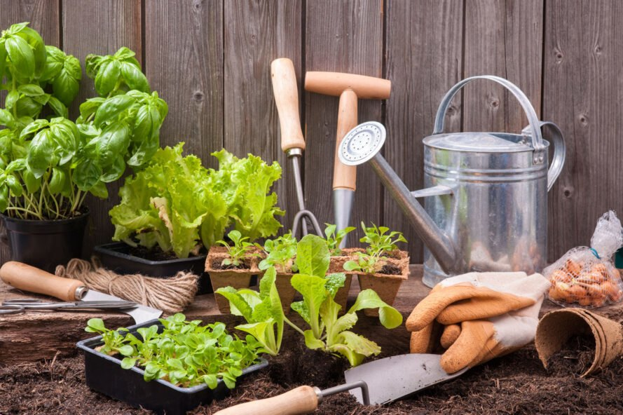 garden tools and starter plants in soil against wood fence