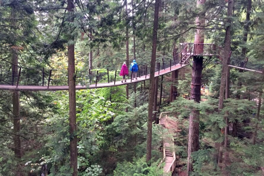 people walking on sky bridge in a forest