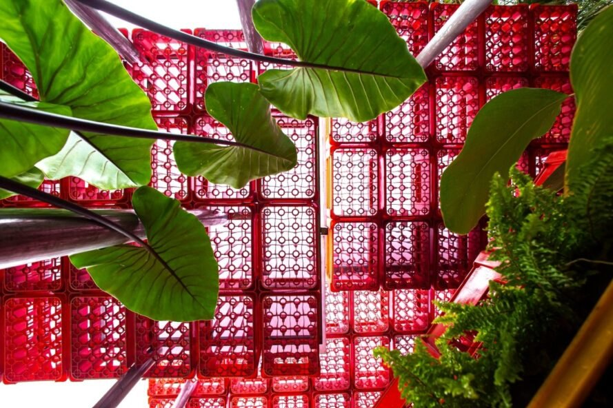 leafs in foreground with red plastic crate ceiling in background