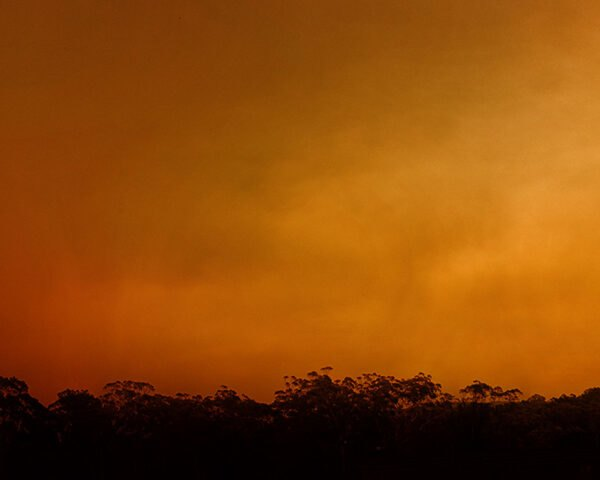a shot of the horizon showing an orange sky full of smoke. dark foliage frame the bottom, left and right sides of the image