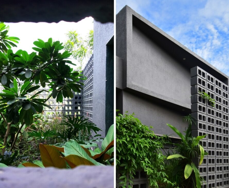 two images. to the left, a tall green plant with a concrete wall behind it. to the right, a large concrete structure with greenery poking out of it