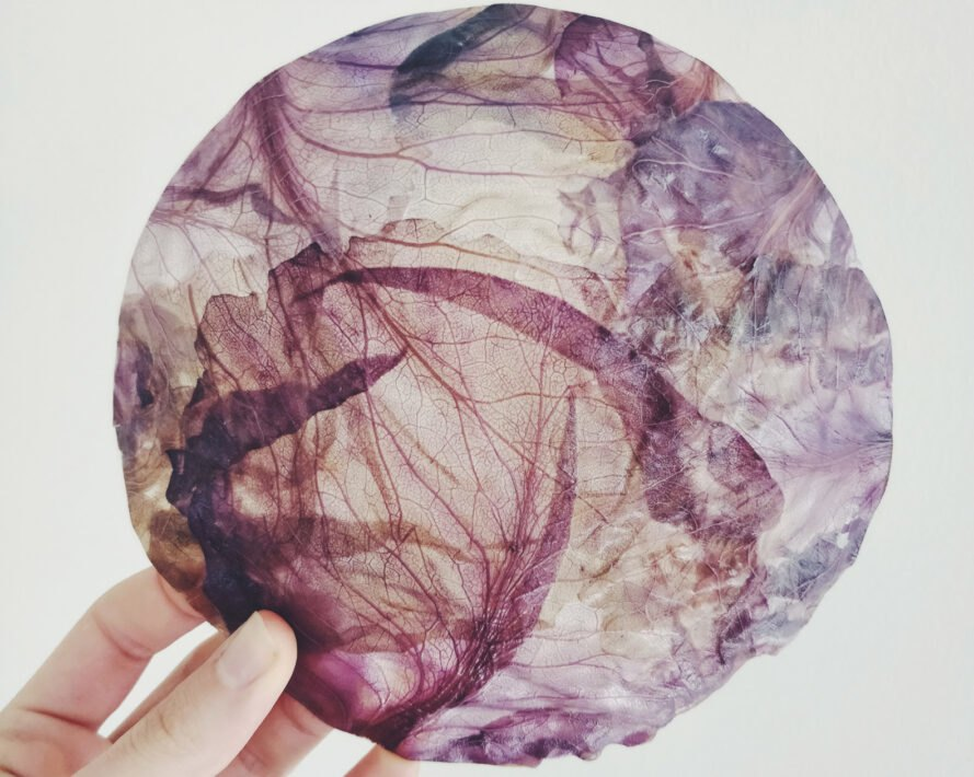 person holding fabric made from purple cabbage