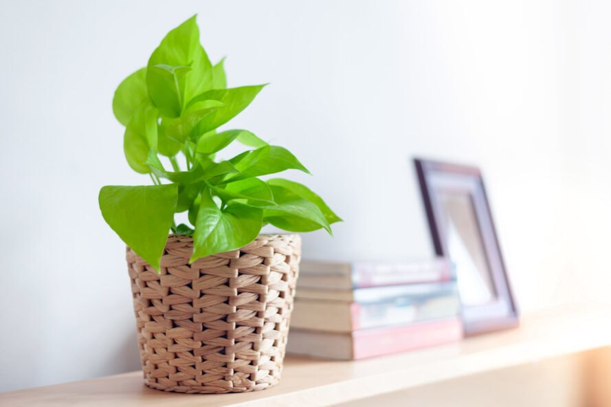 leafy green plant in woven basket on a mantel