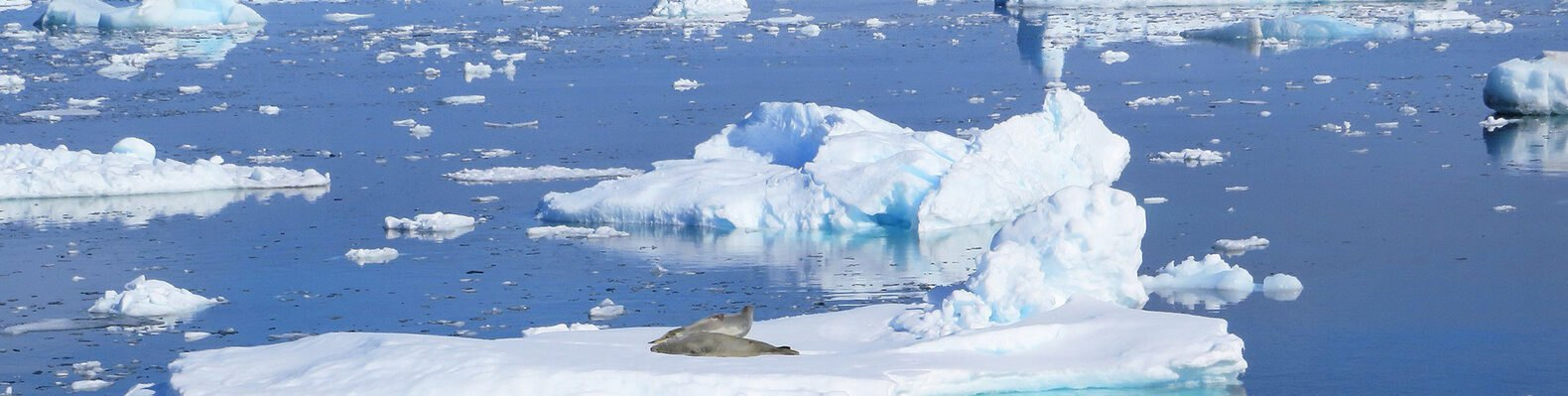 a blue sea with ice floes and two seals on a center ice floe
