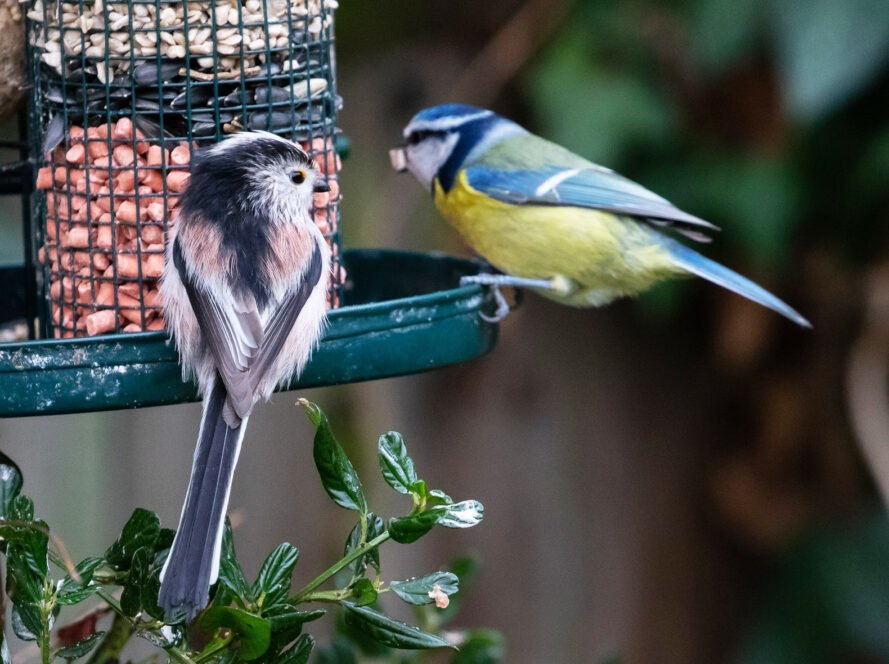 two birds on the edge of a full bird feeder