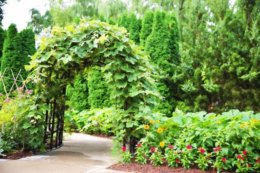 greenery covered trellis