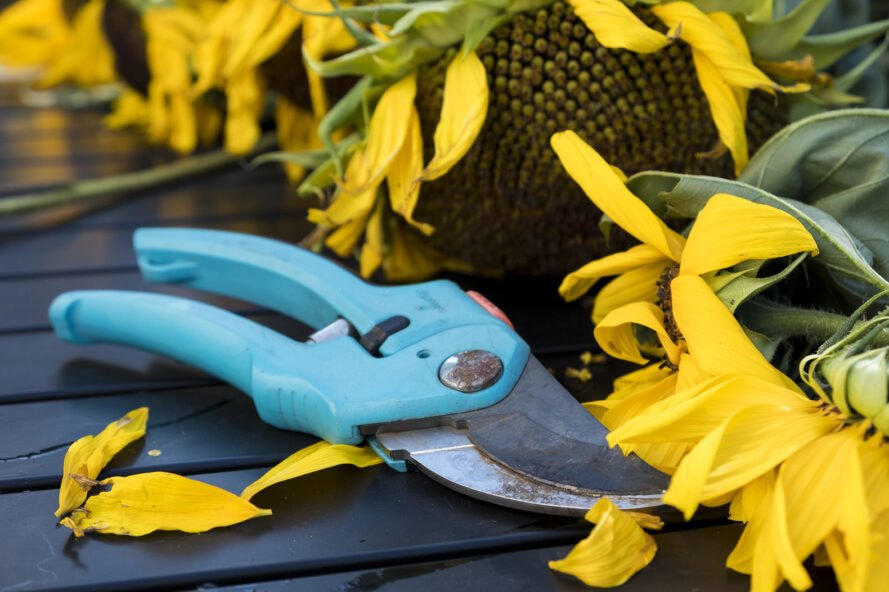 a pair of shears next to a sunflower
