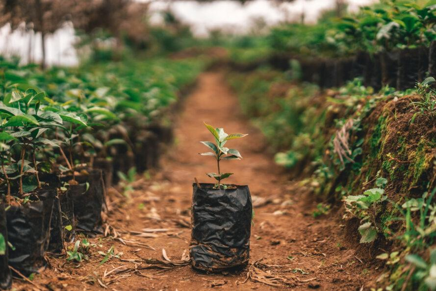 a single tree sapling sits in the middle of rows of plants