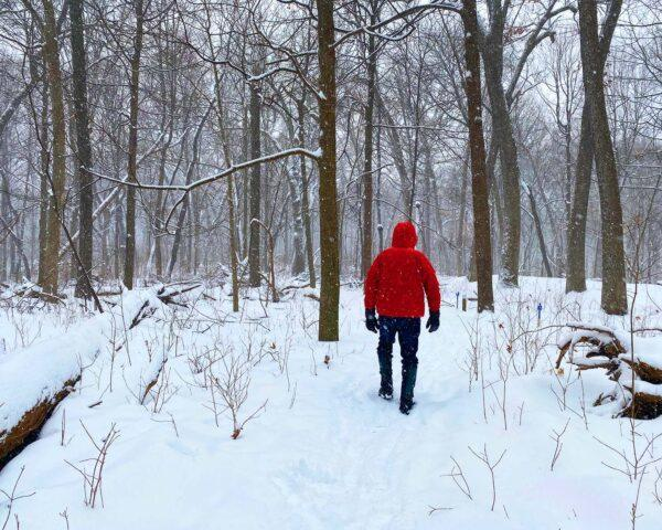 a snowy forest with a person in a bright red jacket walking through