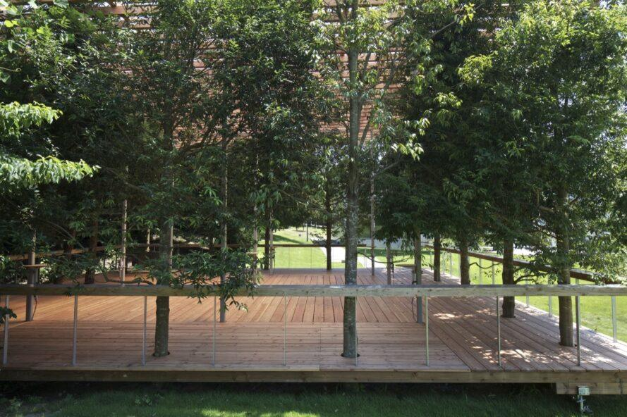 trees growing through a wooden pavilion