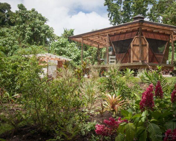 wooden tiny home surrounded by jungle vegetation