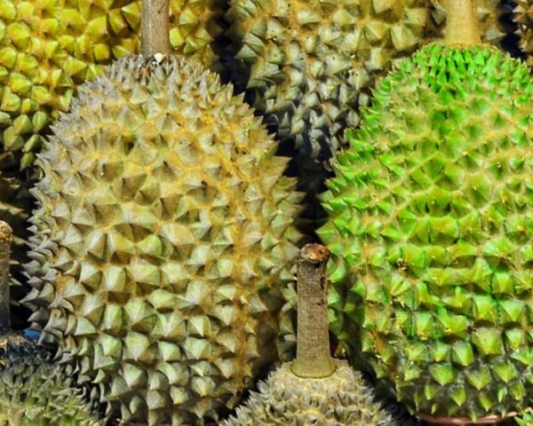 rows of durian fruits