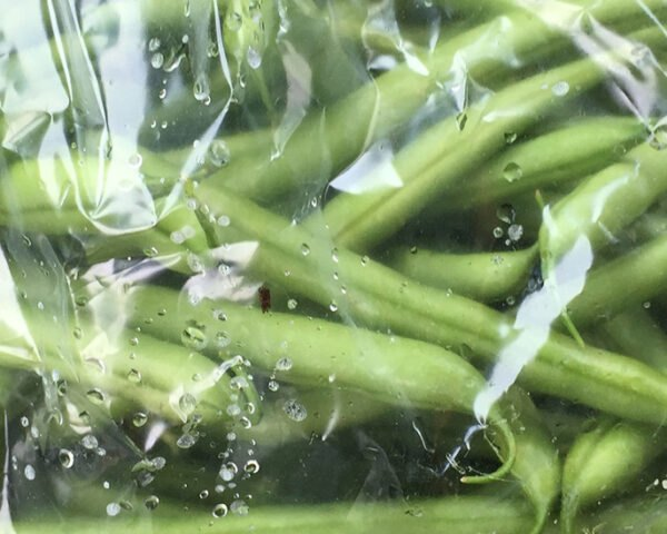 green beans in a clear plastic bag