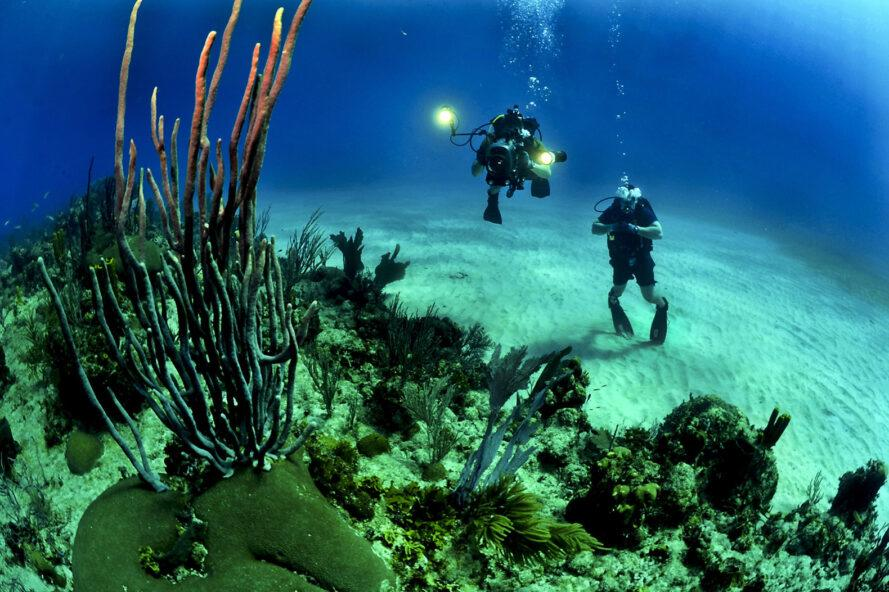 two divers observing underwater life