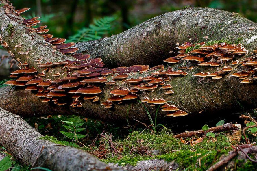 mushrooms growing on a fallen log in a forest