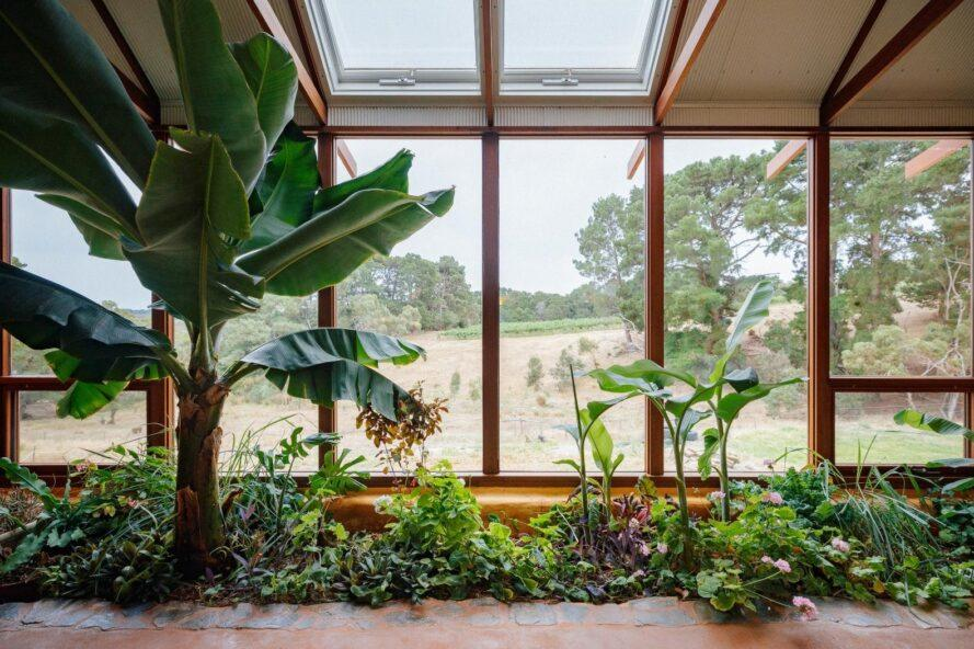 greenhouse filled with plants