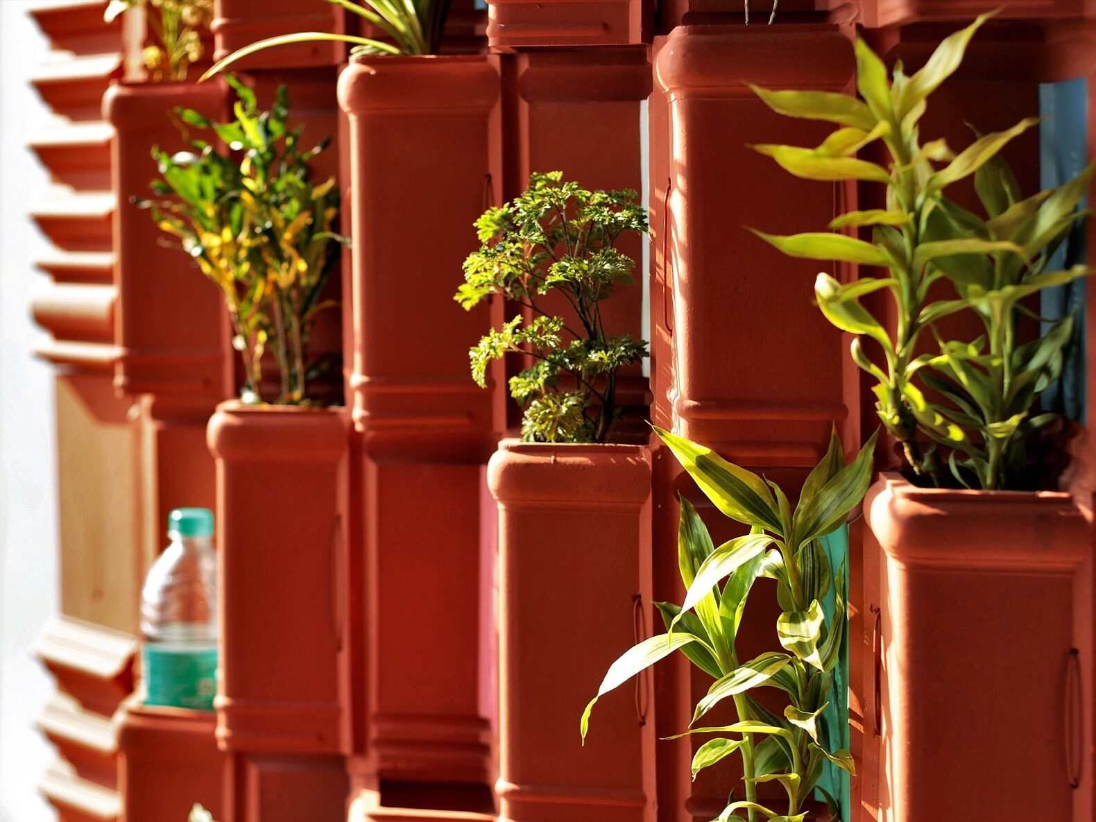 close-up of plants inside clay pots on a vertical garden
