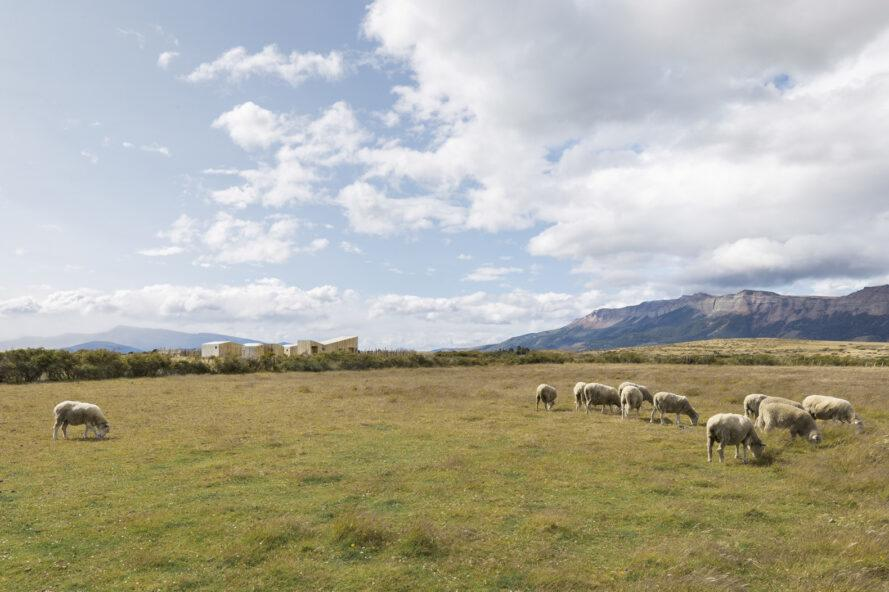 sheep in foreground and wood cabins on the horizon
