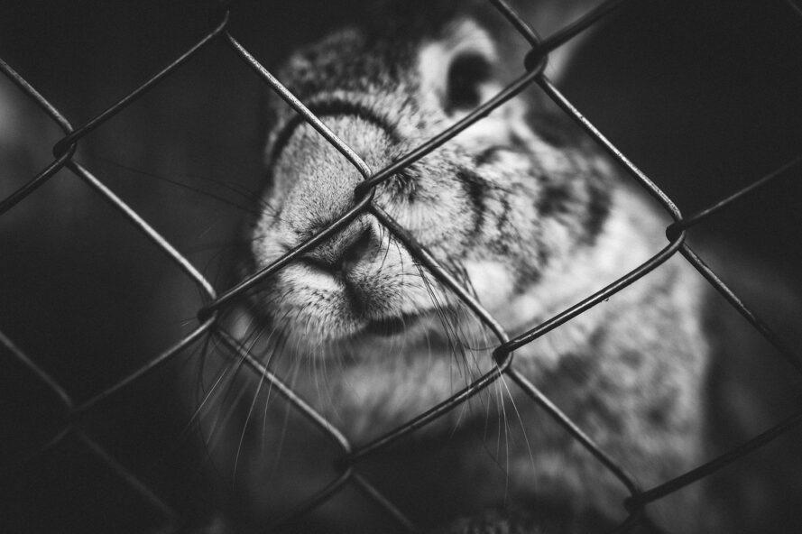 a black and white photo of a rabbit behind a chainlink fence