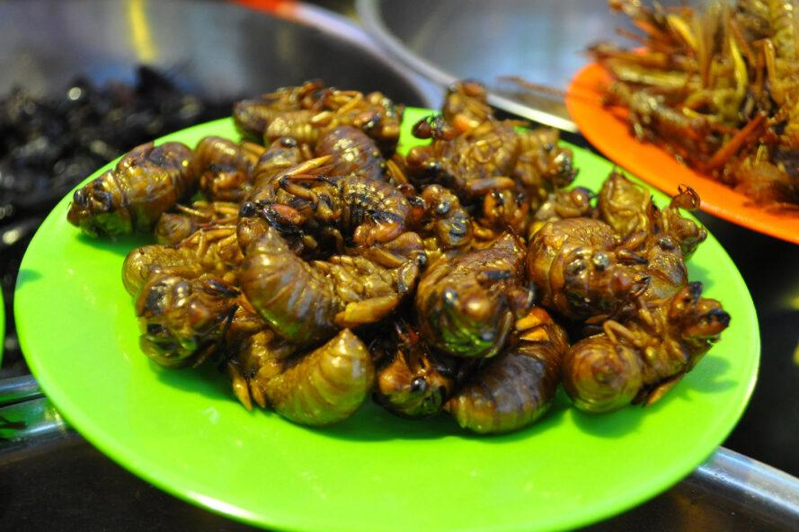 a green plate full of cooked cicadas