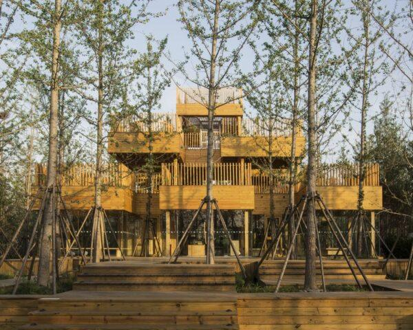 tiered timber teahouse building surrounded by ginkgo trees