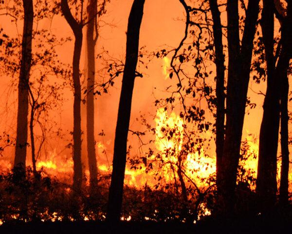a wildfire partially obscured by dark trees
